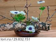 Купить «Икебана японская», фото № 29832151, снято 3 февраля 2018 г. (c) Татьяна Белова / Фотобанк Лори