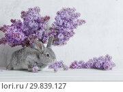 Купить «Easter rabbit with lilac in vase on white background», фото № 29839127, снято 12 мая 2018 г. (c) Майя Крученкова / Фотобанк Лори