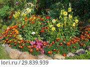 Купить «Декоративная цветочная клумба в саду», фото № 29839939, снято 21 августа 2017 г. (c) Елена Коромыслова / Фотобанк Лори