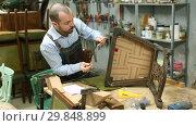 Купить «Young restorer using measuring tools for finding proportions of old chair in woodwork studio», видеоролик № 29848899, снято 29 ноября 2018 г. (c) Яков Филимонов / Фотобанк Лори