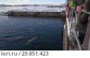 Купить «Люди наблюдают за сивучами в море», видеоролик № 29851423, снято 4 февраля 2019 г. (c) А. А. Пирагис / Фотобанк Лори