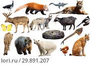 Купить «asia animals isolated», фото № 29891207, снято 26 марта 2019 г. (c) Яков Филимонов / Фотобанк Лори