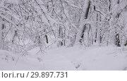 Купить «Road in winter forest, zoom in», видеоролик № 29897731, снято 21 января 2019 г. (c) Михаил Коханчиков / Фотобанк Лори