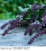 Bunch of blooming basil on wooden table, macro. Стоковое фото, фотограф Короленко Елена / Фотобанк Лори