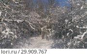 Купить «Beautiful snow winter forest, slider dolly shot», видеоролик № 29909767, снято 16 января 2019 г. (c) Михаил Коханчиков / Фотобанк Лори