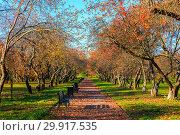 Купить «Autumn and yellow maple leaves in the park in Kolomenskoye park in autumn season aerial view, Moscow, Russia», фото № 29917535, снято 8 декабря 2019 г. (c) Mikhail Starodubov / Фотобанк Лори