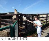 Верблюд и мальчик (2018 год). Редакционное фото, фотограф Елизарова Ирина / Фотобанк Лори