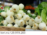 Green onions in boxes at supermarket. Стоковое фото, фотограф Яков Филимонов / Фотобанк Лори