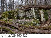 Купить «Краснодарский край, Туапсинский район, дольмен недалеко от аула Малое Псеушхо», фото № 29960927, снято 13 февраля 2019 г. (c) glokaya_kuzdra / Фотобанк Лори
