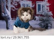 Купить «Cat in a jacket walks through the snowdrifts around the house», фото № 29961755, снято 19 января 2019 г. (c) Светлана Валуйская / Фотобанк Лори