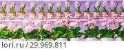 Купить «Pots of geraniums are on the shelf in a large flower shop.», фото № 29969811, снято 16 января 2019 г. (c) Акиньшин Владимир / Фотобанк Лори