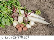 Купить «Урожай овощей на земле», фото № 29970207, снято 15 сентября 2018 г. (c) Елена Коромыслова / Фотобанк Лори