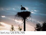 Купить «A family of storks in their nest, sitting high on a pole at sunset in the evening», фото № 29976795, снято 29 июля 2018 г. (c) Алексей Маринченко / Фотобанк Лори