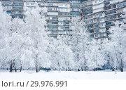 Купить «Зимний день. Сильный снегопад. Микрорайон Северное Чертаново. Москва», фото № 29976991, снято 13 февраля 2019 г. (c) Екатерина Овсянникова / Фотобанк Лори