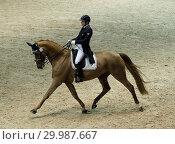 Купить «The CSI 5 W jump at the Madrid Horse Week Featuring: Atmosphere Where: Madrid, Spain When: 26 Nov 2017 Credit: Oscar Gonzalez/WENN.com», фото № 29987667, снято 26 ноября 2017 г. (c) age Fotostock / Фотобанк Лори