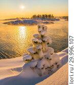 Купить «Новогодние сосны в снегу. Зимний закат на островах Ладожского озера. Морозный закат и деревья в пушистом снегу.», фото № 29996107, снято 23 января 2018 г. (c) Лашков Фёдор / Фотобанк Лори