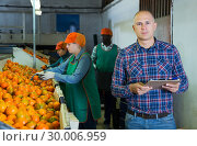 Купить «farmer controlling grading and packing of mandarin oranges performing by female workers», фото № 30006959, снято 15 декабря 2018 г. (c) Яков Филимонов / Фотобанк Лори