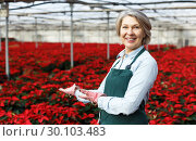 Купить «Happy female on plantation of Poinsettia in her greenhouse», фото № 30103483, снято 22 ноября 2018 г. (c) Яков Филимонов / Фотобанк Лори