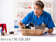 Купить «Vet doctor examining kittens in animal hospital», фото № 30120283, снято 27 августа 2018 г. (c) Elnur / Фотобанк Лори