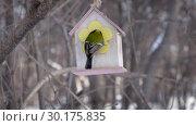 Купить «A small yellow tit is flying to a bird feeder house and flying out in winter», видеоролик № 30175835, снято 24 февраля 2019 г. (c) Татьяна Куклина / Фотобанк Лори