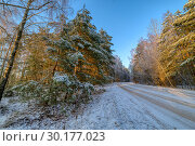 Купить «Pine forest, winter sunny day. The road passes through the forest», фото № 30177023, снято 2 января 2016 г. (c) Андрей Радченко / Фотобанк Лори
