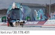 """Купить «Детская гонка на собачьих упряжках """"Дюлин"""" (""""Берингия"""")», видеоролик № 30178431, снято 21 февраля 2019 г. (c) А. А. Пирагис / Фотобанк Лори"""