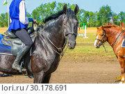 Купить «Portrait of a black horse with a girl in the village.», фото № 30178691, снято 18 августа 2018 г. (c) Акиньшин Владимир / Фотобанк Лори