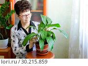 Купить «Женщина ухаживает за комнатным цветком спатифиллум», фото № 30215859, снято 25 марта 2019 г. (c) Людмила Капусткина / Фотобанк Лори