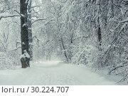 Купить «Black and white landscape - winter forest during a snowstorm, bare branches covered with snow», фото № 30224707, снято 4 февраля 2018 г. (c) Константин Лабунский / Фотобанк Лори