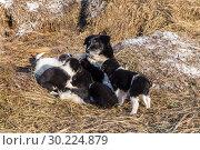 Image with dogs. Стоковое фото, фотограф Ирина Толокновская / Фотобанк Лори