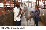 Купить «Positive Caucasian girl and afro man using electric trimmer for shearing gray horse in stable», видеоролик № 30232295, снято 13 ноября 2018 г. (c) Яков Филимонов / Фотобанк Лори