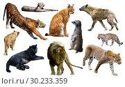 Купить «Set of wild mammals isolated over white», фото № 30233359, снято 22 марта 2019 г. (c) Яков Филимонов / Фотобанк Лори