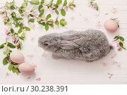 Купить «rabbit with flowers on white wooden background», фото № 30238391, снято 14 мая 2018 г. (c) Майя Крученкова / Фотобанк Лори