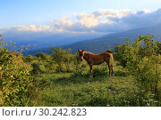 Купить «Young foal grazing in the valley in the summers sun», фото № 30242823, снято 24 июня 2017 г. (c) Яна Королёва / Фотобанк Лори