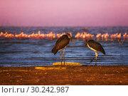 Купить «Two marabou birds and pink flamingoes on the lake», фото № 30242987, снято 17 августа 2015 г. (c) Сергей Новиков / Фотобанк Лори