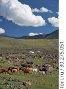 Mongolian landscape with mountain steppe under running cumulus clouds on blue sky, yurts and goats herd (2017 год). Стоковое фото, фотограф Serg Zastavkin / Фотобанк Лори