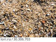 Купить «Background of seashells. Shelly beach», фото № 30306703, снято 26 сентября 2015 г. (c) Евгений Ткачёв / Фотобанк Лори