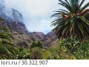 Купить «Fabulous Masca mountain gorge the most visited tourist attraction on Tenerife», фото № 30322907, снято 13 сентября 2015 г. (c) Ирина Мойсеева / Фотобанк Лори