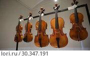 Купить «Музыкальные инструменты на открытии Всероссийской выставки скрипичных мастеров в Шереметевском дворце - Музее музыки, Санкт-Петербург», видеоролик № 30347191, снято 18 марта 2019 г. (c) Stockphoto / Фотобанк Лори