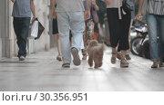 Купить «Walking people and dog in the street», видеоролик № 30356951, снято 25 марта 2019 г. (c) Данил Руденко / Фотобанк Лори