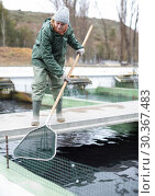 Купить «Woman catching fish with landing net on sturgeon farm», фото № 30367483, снято 4 февраля 2018 г. (c) Яков Филимонов / Фотобанк Лори