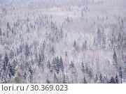 Купить «Winter snowy forest with a bird's eye view», фото № 30369023, снято 9 марта 2019 г. (c) Евгений Харитонов / Фотобанк Лори