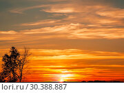 Купить «The landscape is summer. The sky is orange red bright color in the evening at sunset and the silhouette of a tree on the background», фото № 30388887, снято 16 сентября 2017 г. (c) Светлана Евграфова / Фотобанк Лори