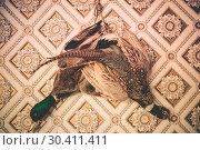 Купить «Pheasant and Duck Taxidermy», фото № 30411411, снято 17 февраля 2020 г. (c) easy Fotostock / Фотобанк Лори