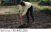 Купить «Young woman farmer working with hoe in vegetable garden, hoeing the soil», видеоролик № 30443283, снято 26 февраля 2019 г. (c) Яков Филимонов / Фотобанк Лори