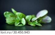 Купить «Bunch of fresh green mint on black background», видеоролик № 30450943, снято 1 апреля 2019 г. (c) Peredniankina / Фотобанк Лори