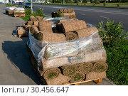 Купить «The rolled lawn folded in stacks outside», фото № 30456647, снято 4 июня 2018 г. (c) Володина Ольга / Фотобанк Лори