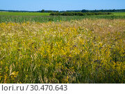 Beautiful nature in the steppe part of Russia in summer. Стоковое фото, фотограф Володина Ольга / Фотобанк Лори