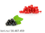 Купить «Berries of black and red currants on a white background», фото № 30487459, снято 19 мая 2014 г. (c) Ласточкин Евгений / Фотобанк Лори