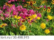 Купить «Клумба с яркими садовыми цветами», фото № 30498915, снято 8 августа 2018 г. (c) Елена Коромыслова / Фотобанк Лори
